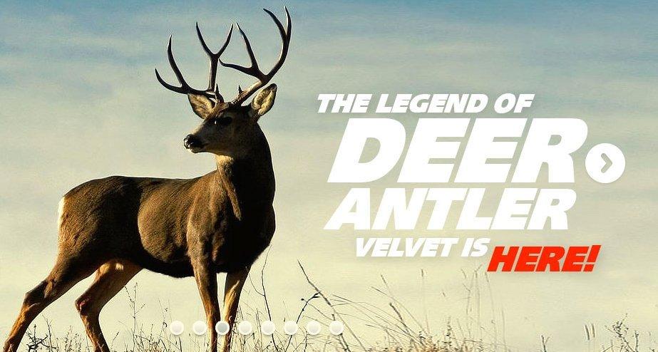 deer-antler-velvet